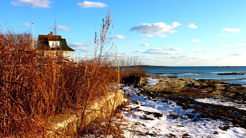Icy Shores